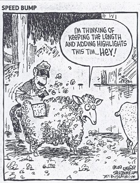 Sheep Shearing cartoon